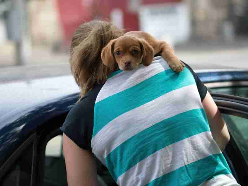 moving with your dog abroad